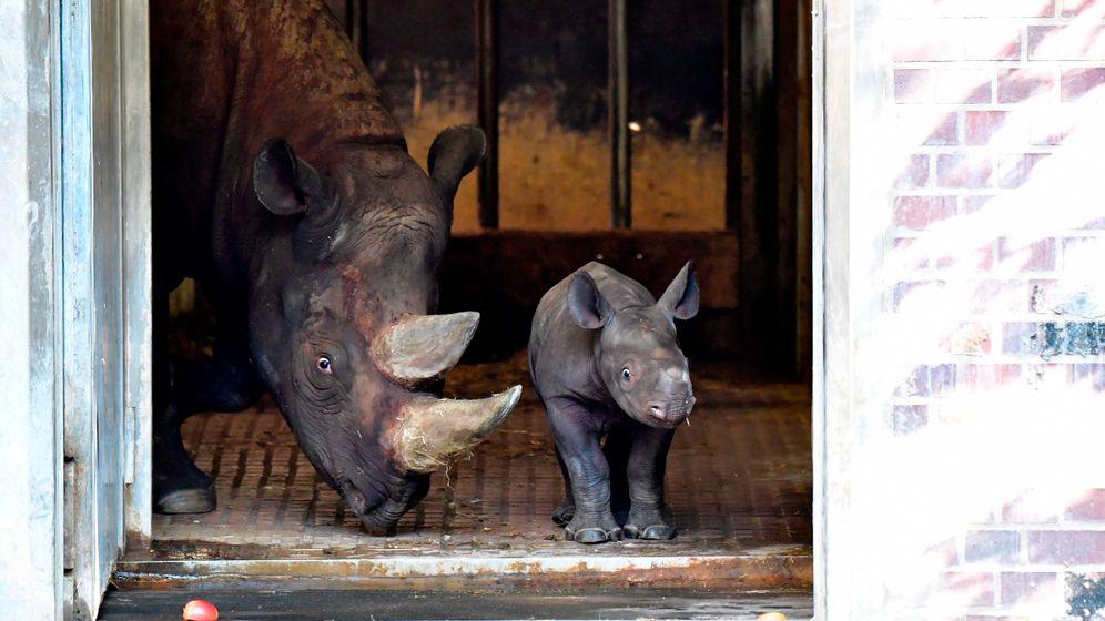 Nashornbaby: Berliner Zoo zeigt Nachwuchs