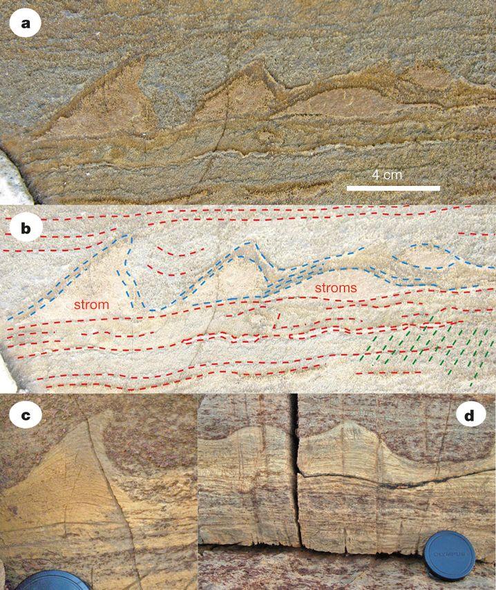 Wellen im Gestein: Die Abbildungen a und b (Gesamtansicht: Klick ins Bild) zeigen einen Teil des Fundes aus Grönland. Die Bilder c und d zeigen zum Vergleich australische Funde extrem ähnlicher Stromatolithe