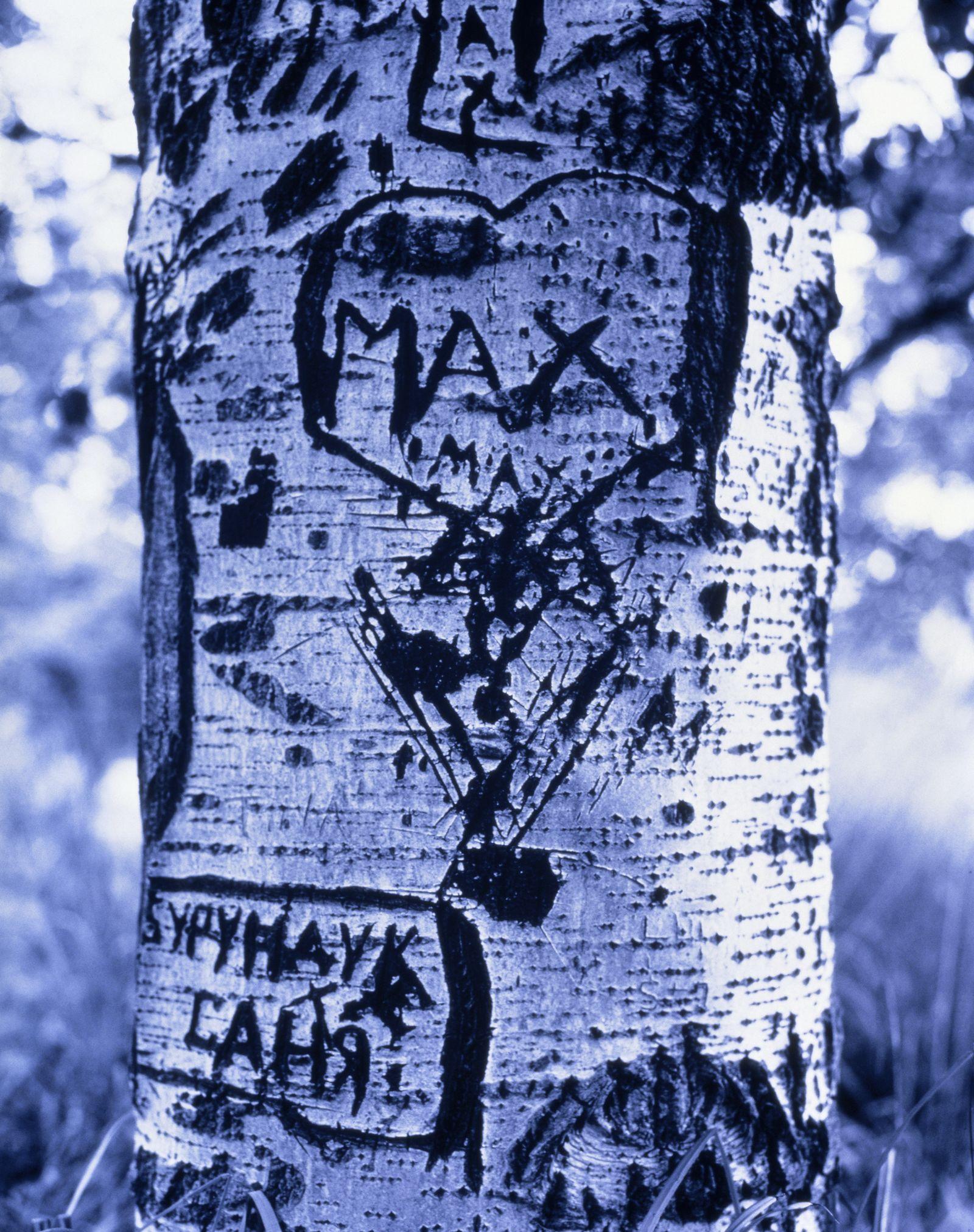 NICHT MEHR VERWENDEN! - Baum / Eingeritzte Sprüche