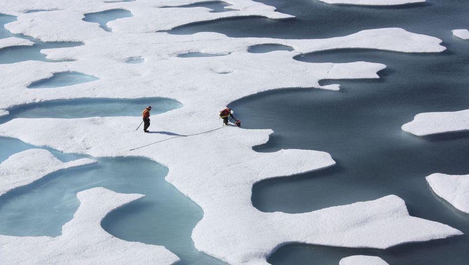 """Forscher in der Arktis: """"Wie die Suche nach der Nadel im Heuhaufen"""""""