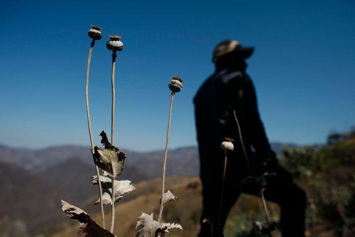 Wege aus der Armut: Die ehemaligen Mohn-Bauern aus Guerrero suchen nach alternativen Einkommensquellen