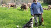 Sollen Kühe ihre Hörner behalten?