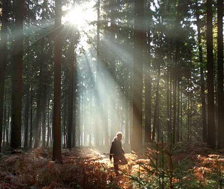 Wald: Je wärmer es wird, desto mehr Kohlendioxid produzieren die Mikroorganismen im Boden