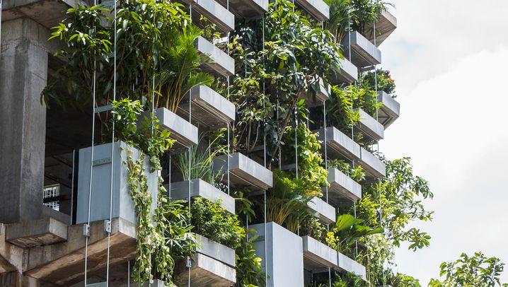 Urbane Pflanzenwelten
