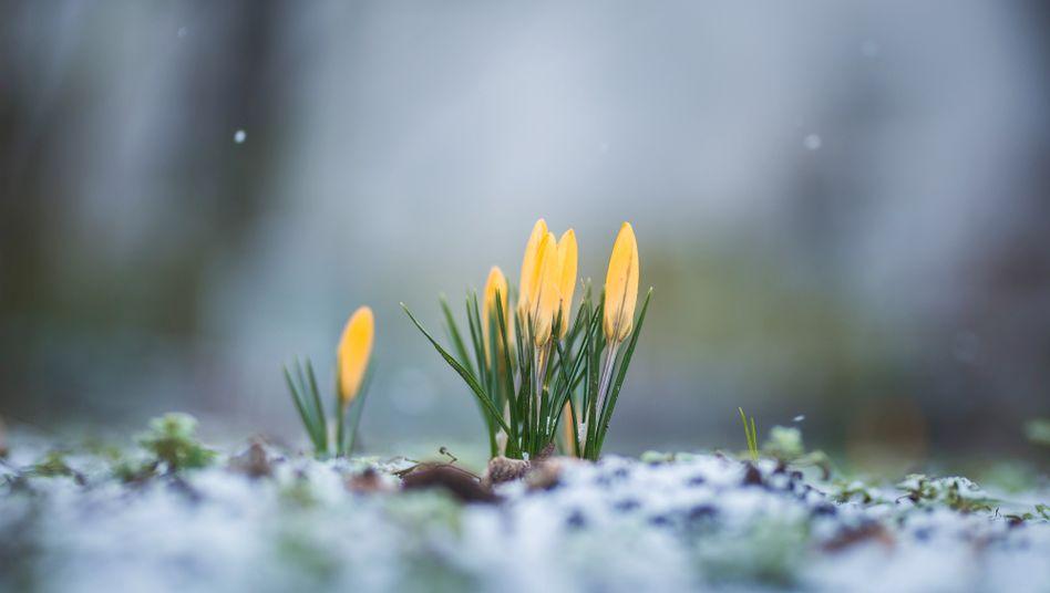 Gebietsweise kommt es in Deutschland zu Bodenfrost