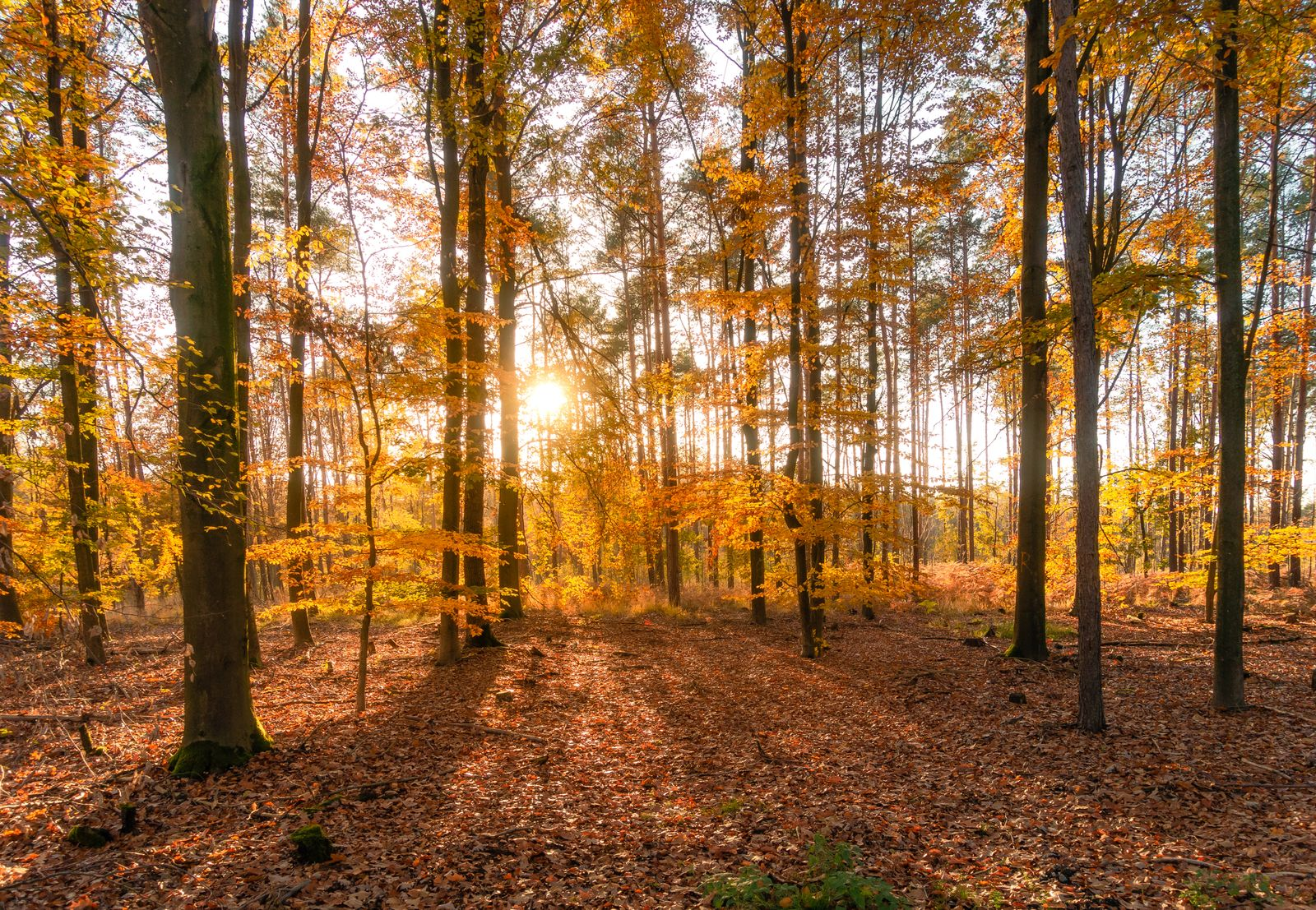 Trees In Forest During Autumn, Trebsen, Germany