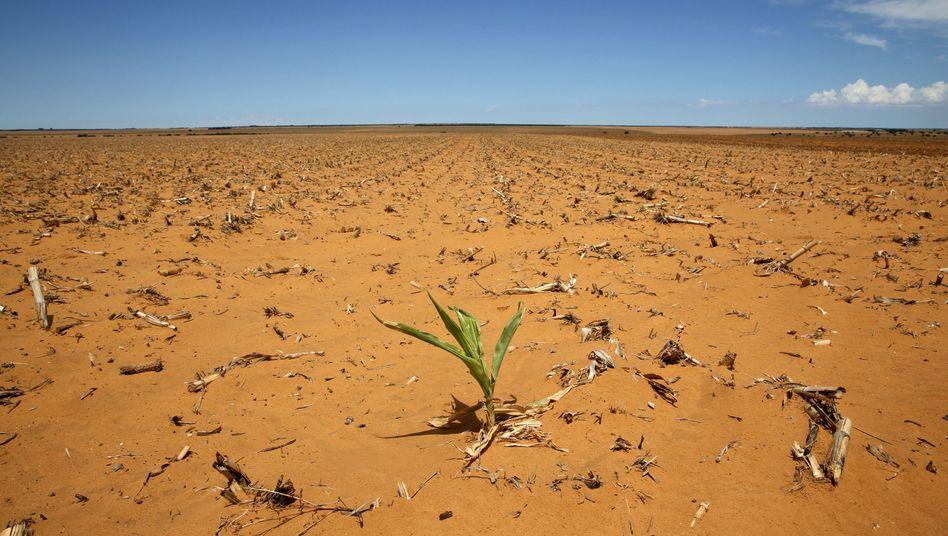 Dürre in Südafrika