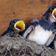 Es gibt weniger insektenfressende Vögel in Europa