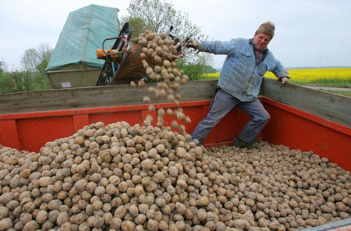 Kartoffelpflanzung in Mecklenburg-Vorpommern