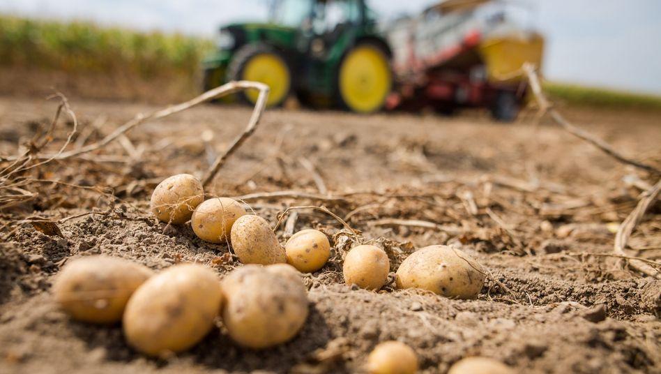 Kartoffelernte in Baden-Württemberg