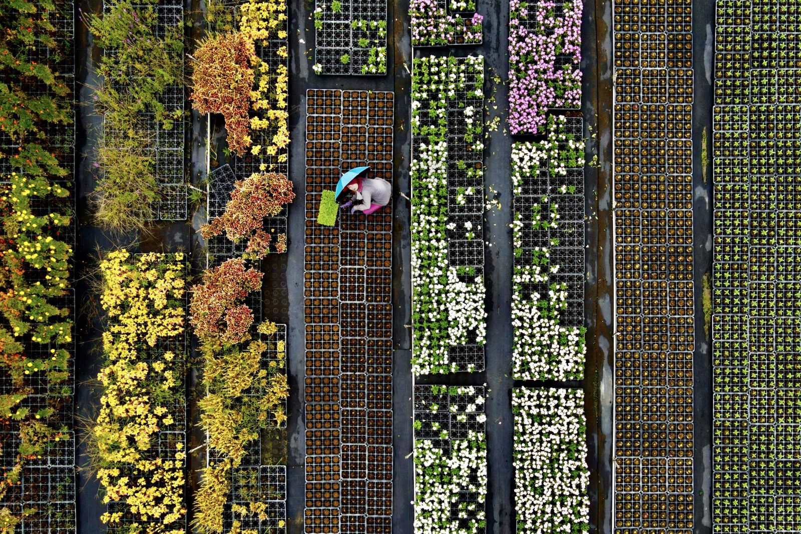 TOPSHOT-TAIWAN-AGRICULTURE