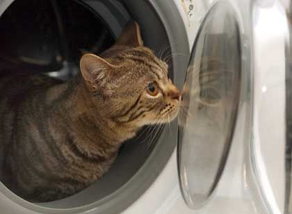 Katze im Haushalt: Quelle für Niesen und Dauerschnupfen