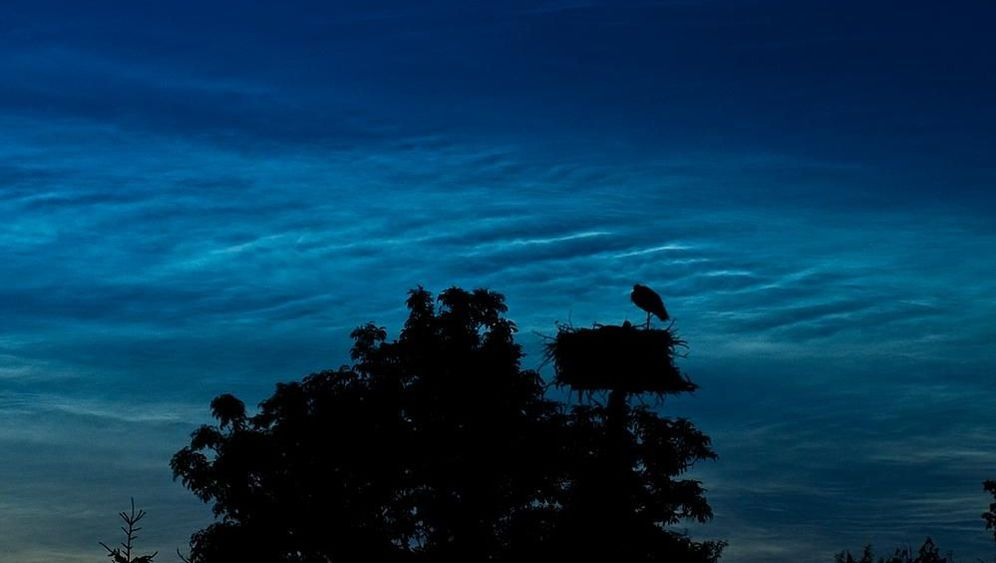 Schönheiten im Schattenreich: Das Leuchten der Nacht