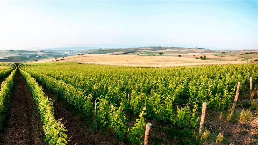 Weinanbau in der Türkei: Alkoholproduzent unter Abstinenzlern