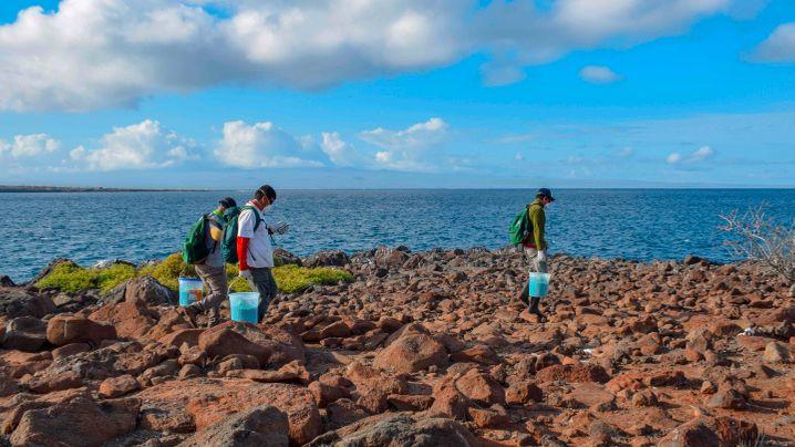 Rattenplage auf Galapagos-Inseln: Köder aus der Luft
