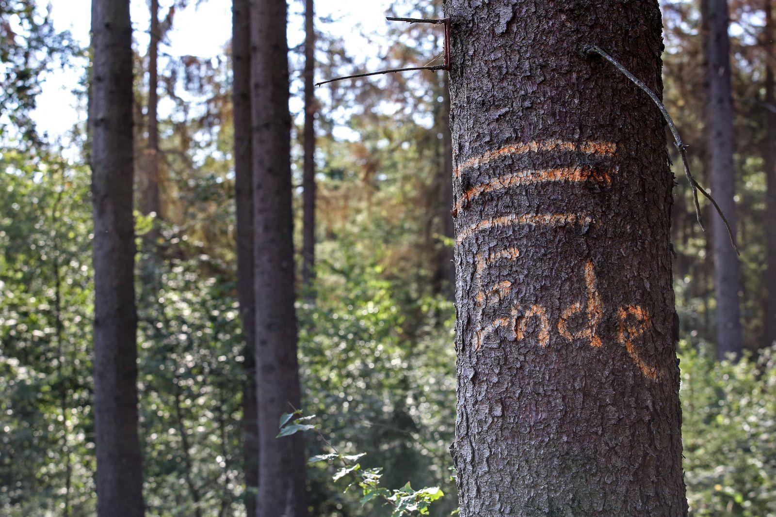 Waldsterben auf dem Gilberg, überall sieht man kranke, abgestorbene Baeume, auf einem Baum steht das Wort ENDE Waldster