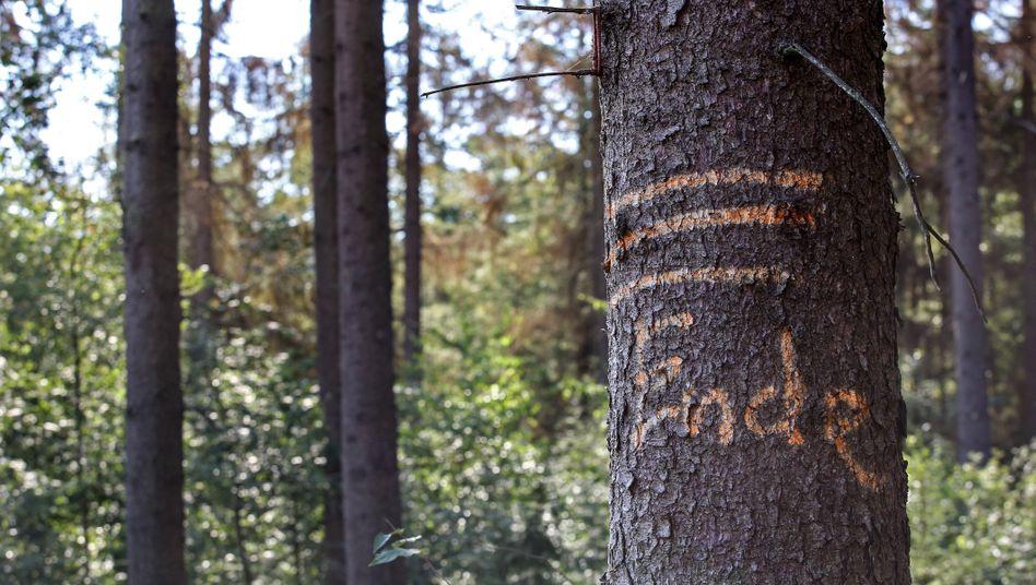 Markierter Baum im Siegerland: Waldbesitzer wollen höhere Preise