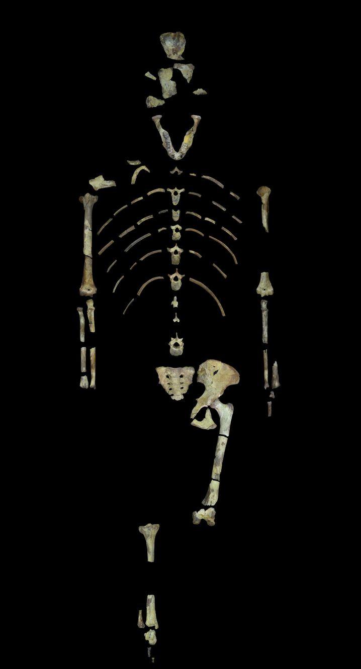 3,18 Millionen Jahre alte Knochen