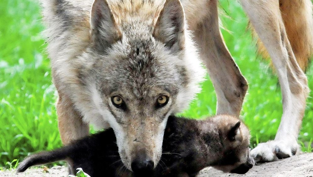 Naturschutz: Das Comeback der Wildnis