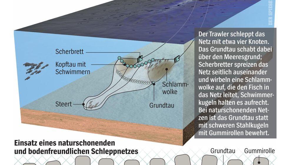 Nordsee: Die Rettung des Kabeljau