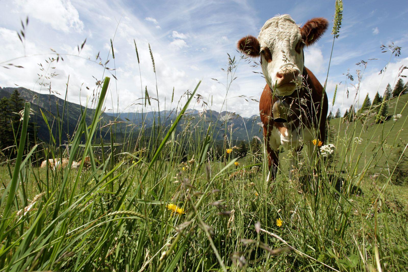 Illustration Fleischverzicht - Kuh auf der Weide