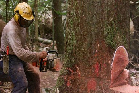 """Brasilianischer Waldarbeiter im Amazonas (im Jahr 1999): """"Entwaldung zu vermeiden, ist alles andere als Nichtstun"""""""