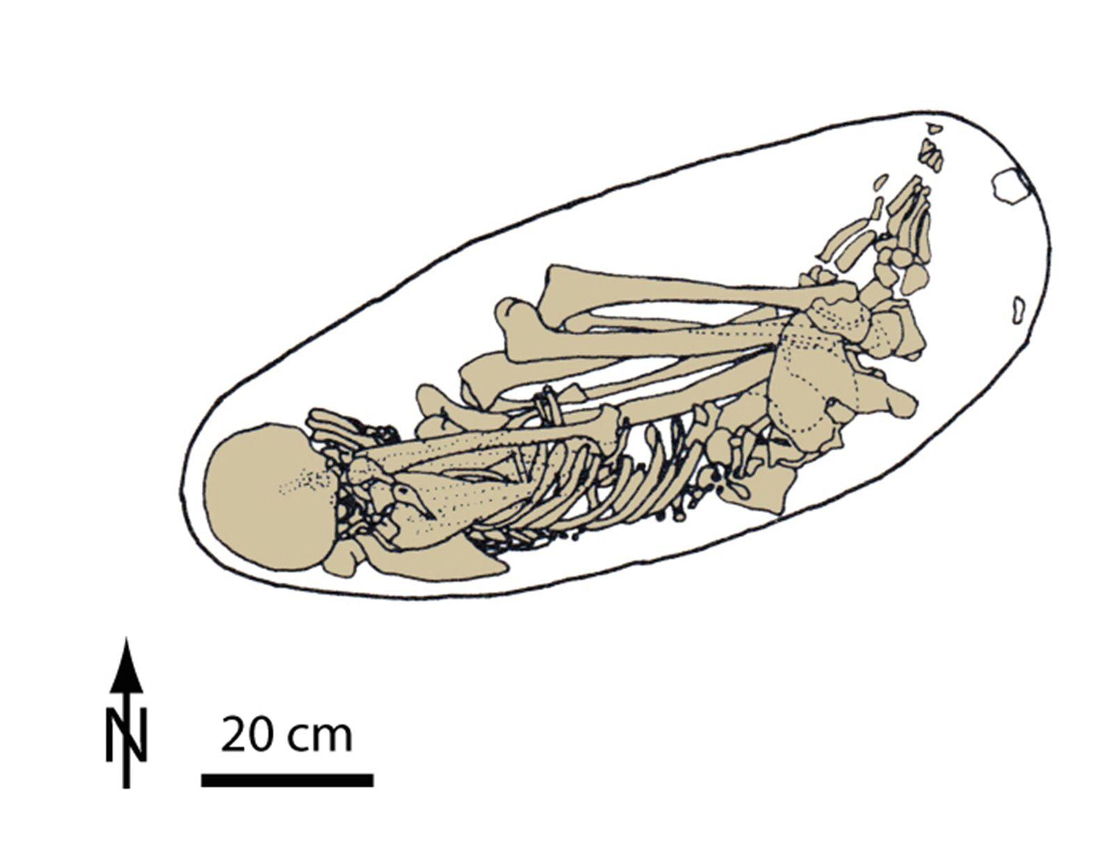 EINMALIGE VERWENDUNG Fossil Herkunft Europäer