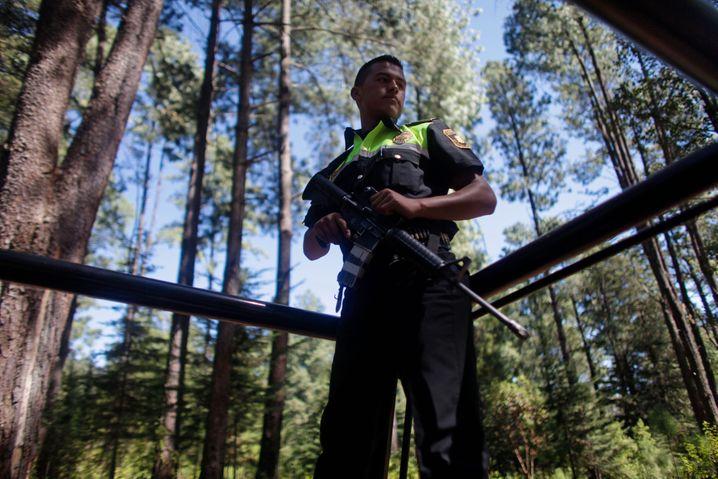 Der Kampf um Mexikos Wälder ist gefährlich – hier sucht ein Polizist nach illegalen Holzfällern