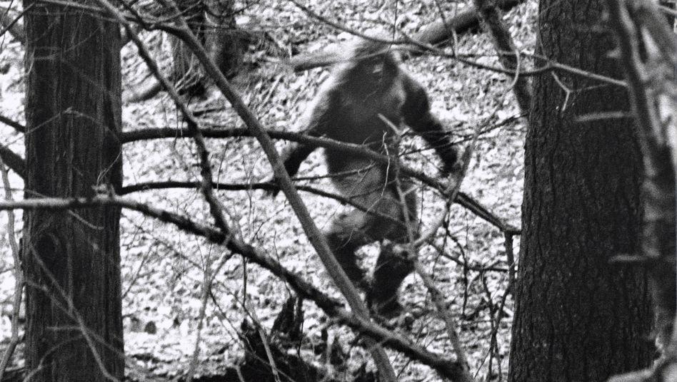 Angebliche Sichtung: Gerüchte um das Affenwesen