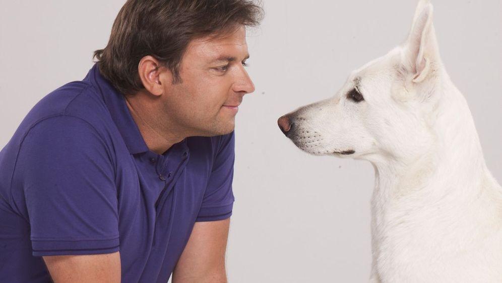 Hunde und Jogger: Tipps vom Hundeflüsterer