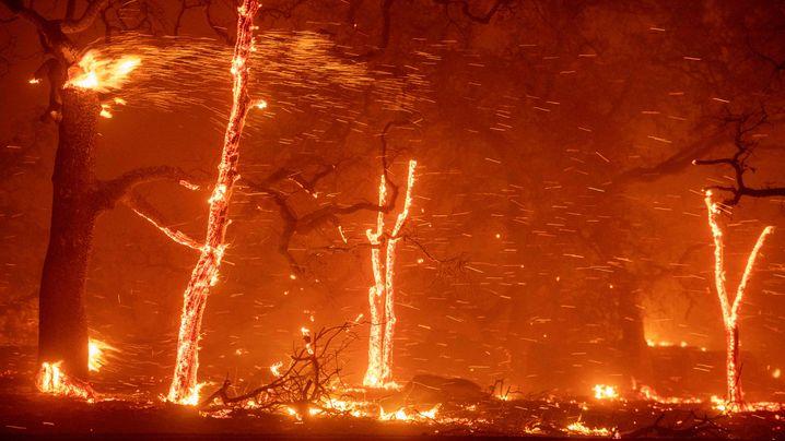 """Fotograf beim Waldbrand in Paradise: """"Die Stadt hatte keine Chance"""""""