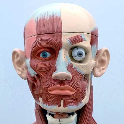 Kopfsache: Nasenform, Oberlippe, Sitz der Ohren - alles Indizien für Berufserfolg?