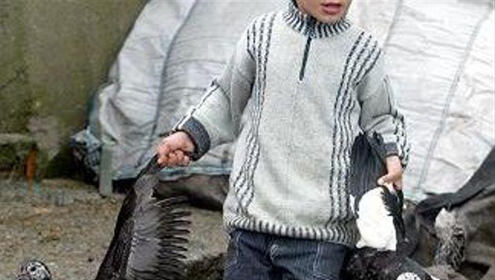 Vogelgrippe: Schutzmaßnahmen in der Türkei und Deutschland