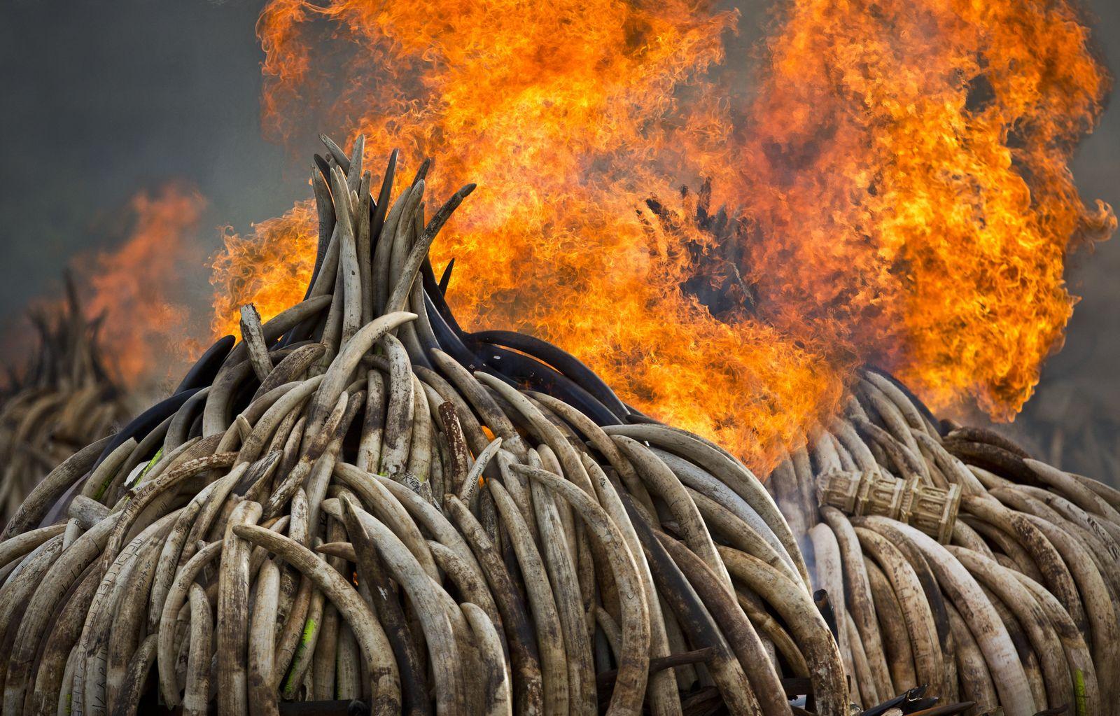 Kenia/ Wilderer