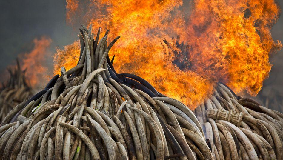 Kampf gegen Wilderer (Symbolbild)