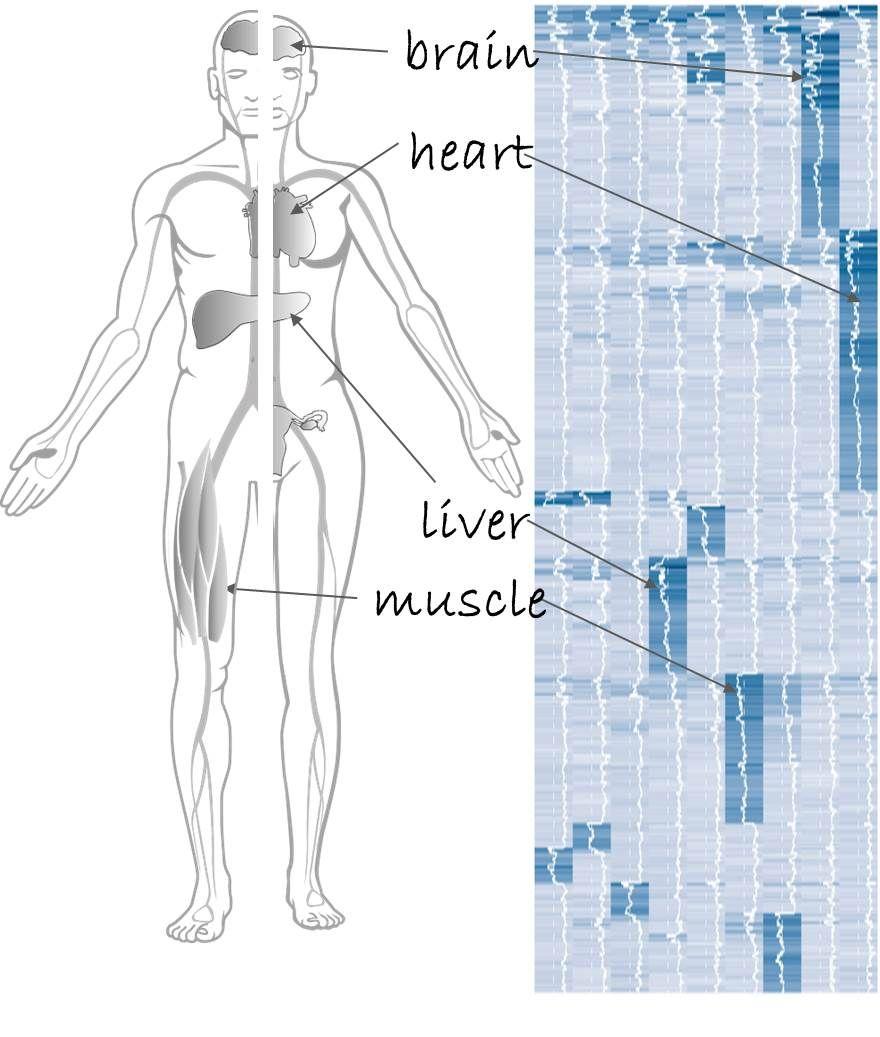 EINMALIGE VERWENDUNG GRAFIK Proteine / Humanprotein