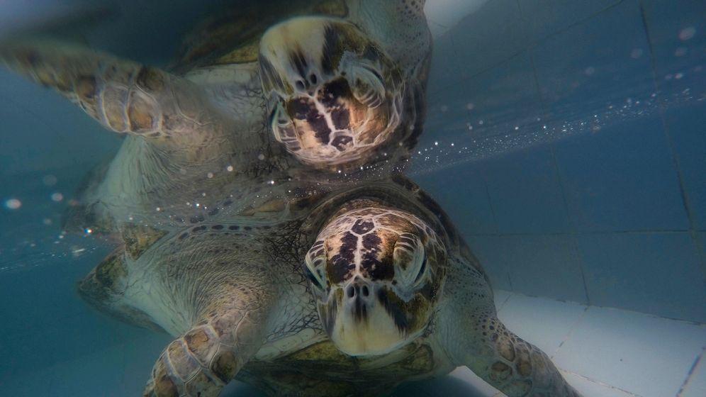 Thailand: Schildkröte schluckt Hunderte Münzen