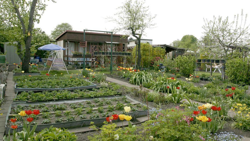 Kleingärten und Urban Farming: Oasen in der Stadt
