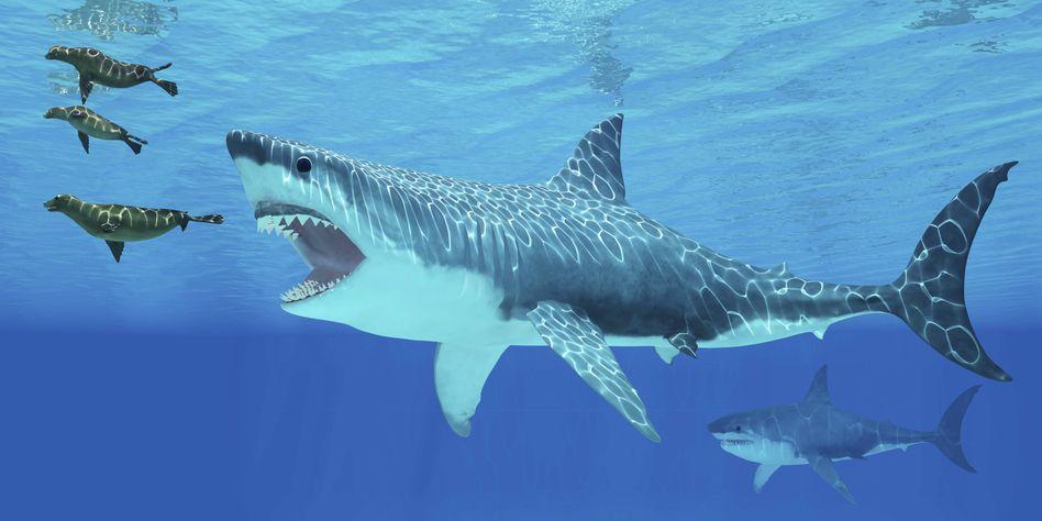 Rekonstruktionsgrafik des Urzeithais Megalodon
