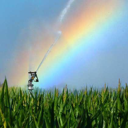 """Bewässerung eines Maisfeldes (in der Rheinebene bei Feldkirch, 2003): """"Beim Wasser leben wir über unsere Verhältnisse"""""""