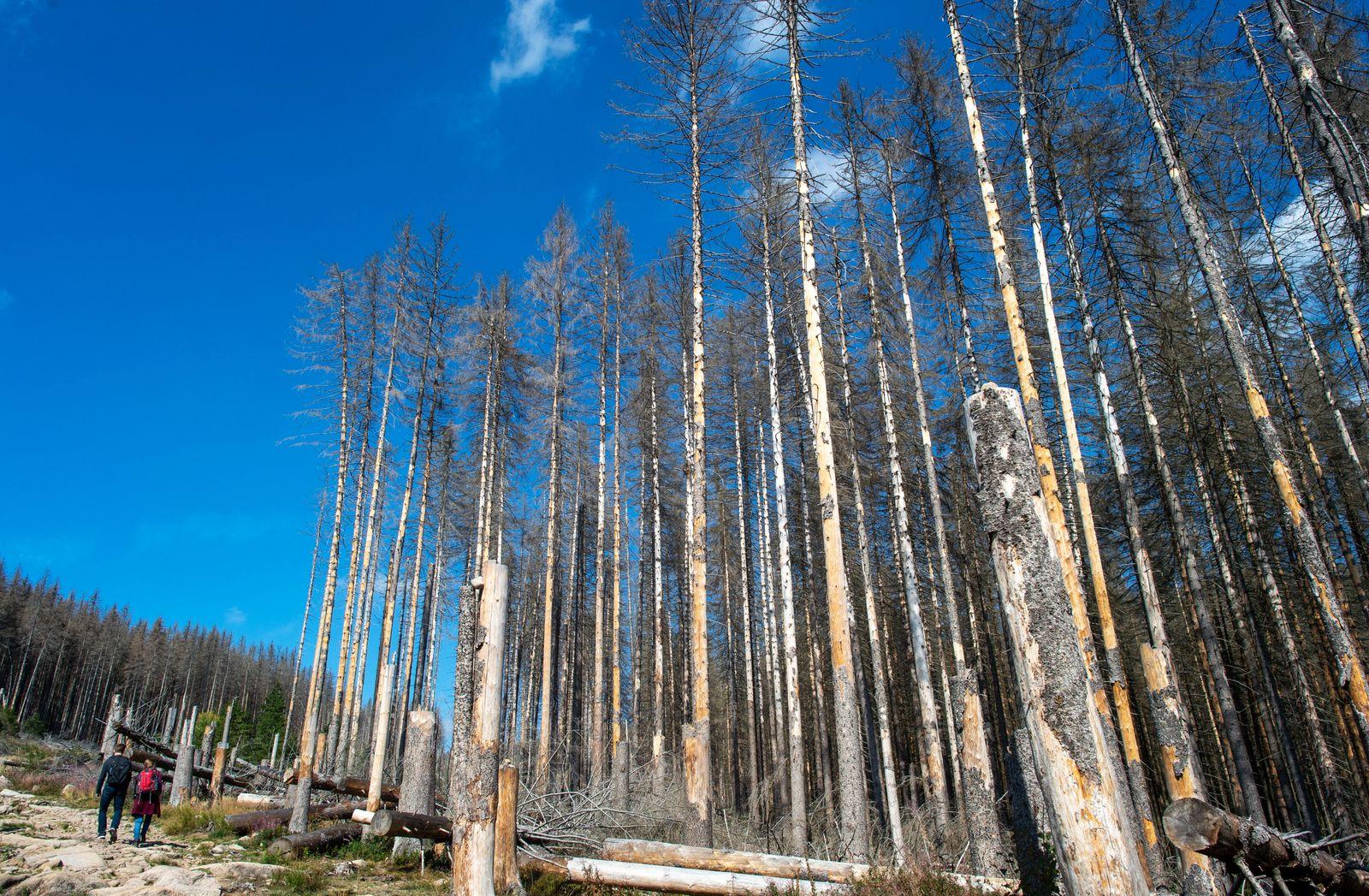 Ministerin und Forstleute stellenForderungen