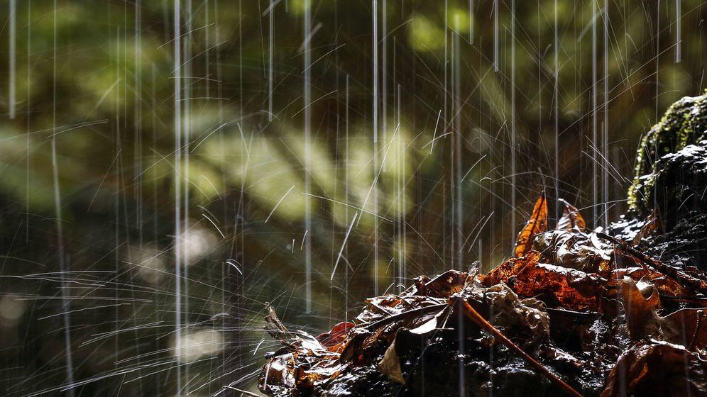 Petrichor: Es riecht nach Regen