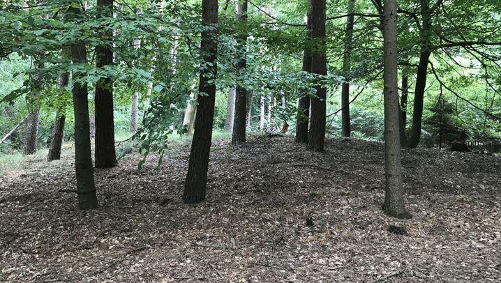 Versteckte Archäologie: Überraschung im Gebüsch