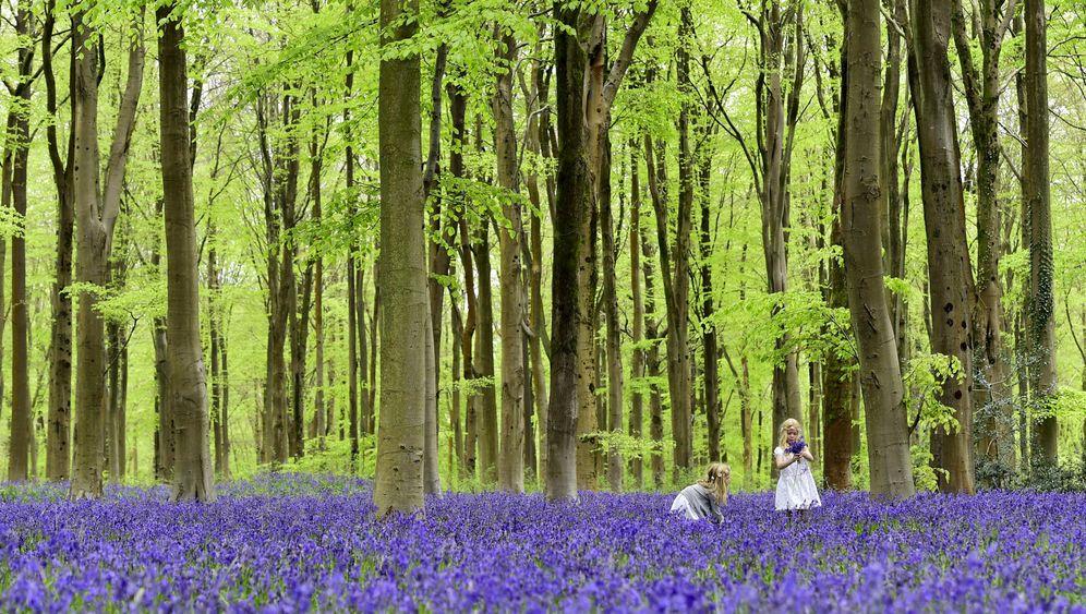 Neue Baumzählung: Weltweiter Wald