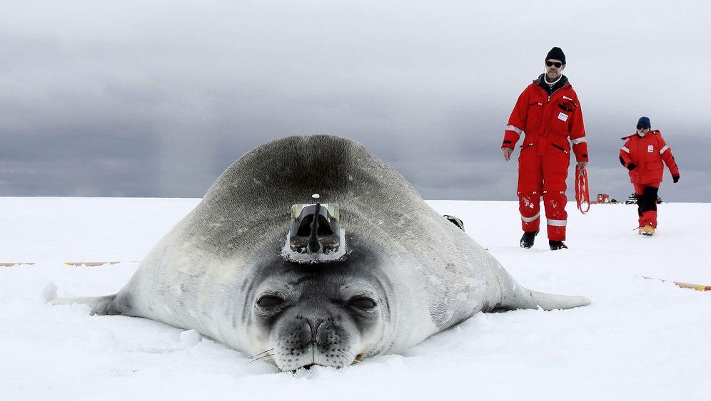Forschung in der Antarktis: Robben und Roboter