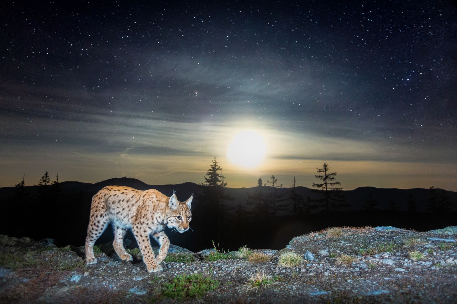 Nature TTL Photographer of the Year 2021 / Camera Traps