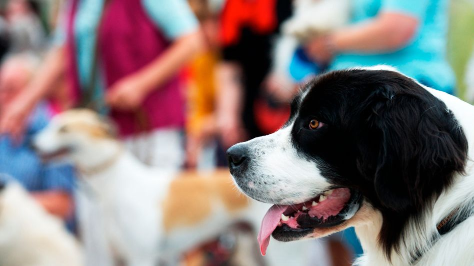 Hund auf einer Heimtiermesse: Tiere als Wirtschaftsfaktor