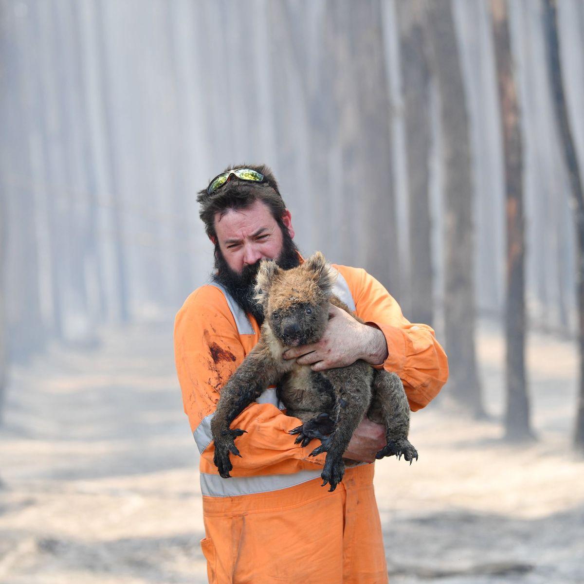 Szenen aus Australien: Das verbrannte Land