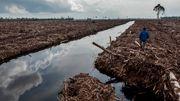 So viel Wald vernichtet unser Konsum