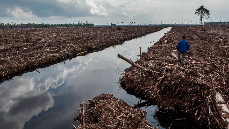Gerodete Waldflächen auf Sumatra in Indonesien